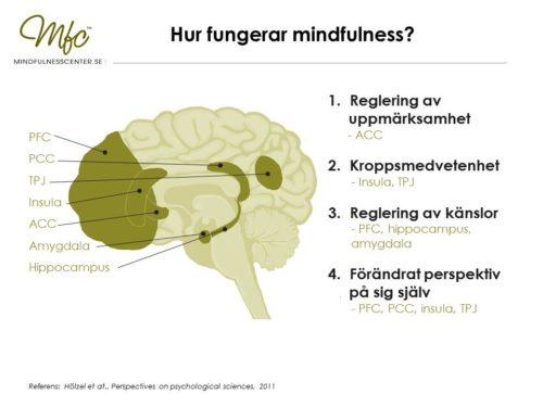 Hjärnan - hur fungerar mindfulness 1 bild