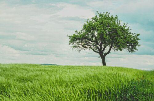 Rusta dig för livets utmaningar genom att stärka din återhämtningsförmåga/resiliens