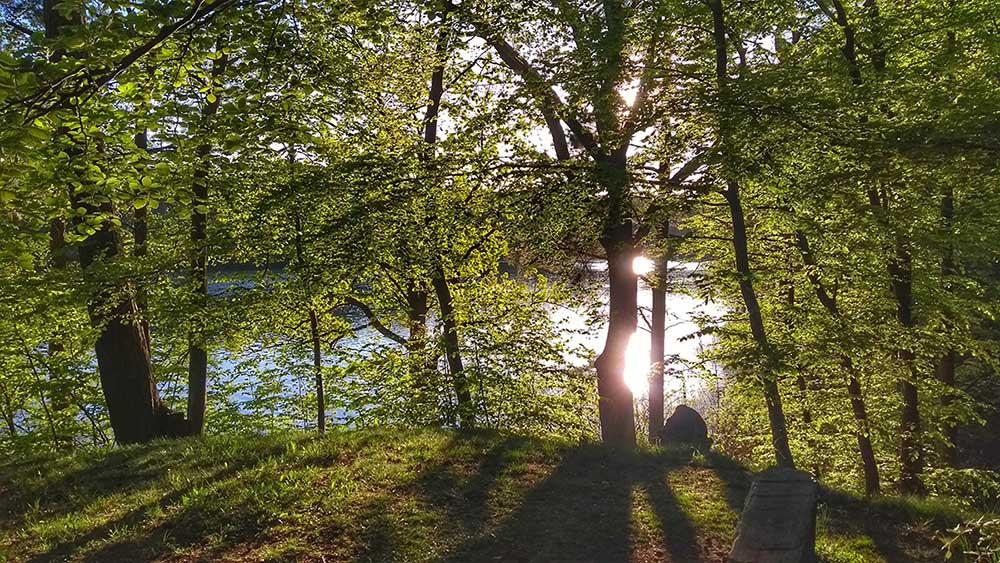 Mindfulness i naturen – Del 1. Om att ta sig ut för att komma hem.